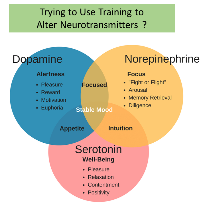 Emotional Intelligence Training -Corporate Training for Traits Vs Skills